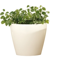 Scheurich 13 x 12cm Glossy Cream Glazed Indoor Pot