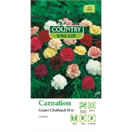 Country Value Carnation Giant Chabaud Mixed